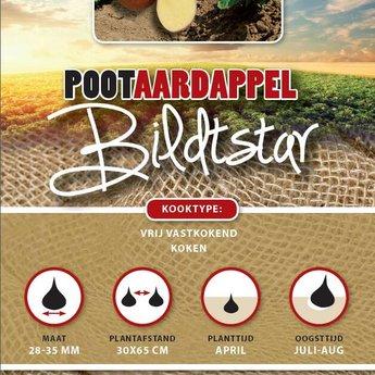 Moestuinplant 1 kilo Bildtstar pootaardappel met rode schil