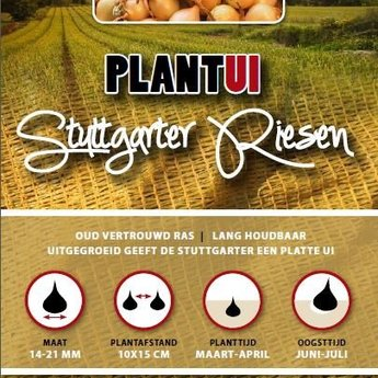 Moestuinplant 500 gram plantuien stuttgarter riesen