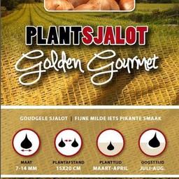 Moestuinplant Plantsjalot Golden Gourmet 500 Gram