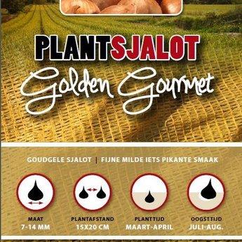 Moestuinplant 250 gram plant sjalotten golden gourmet