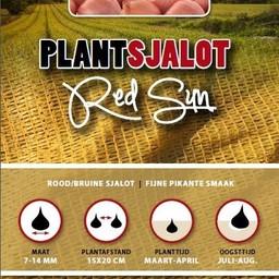 Plantsjalot Red Sun 250 Gram
