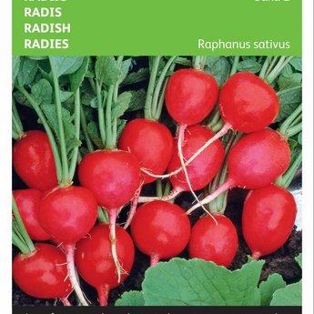 Moestuinplant Radijs Saxa groentezaden