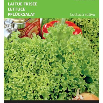 Moestuinplant Krulsla Lollo Bionda groentezaden