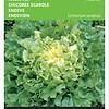 Moestuinplant Andijvie