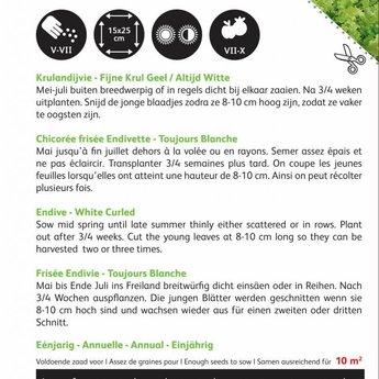 Moestuinplant Krulandijvie Fijne Krul