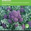 Moestuinplant Broccoli Paars