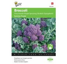 Broccoli Summer Purple zaden