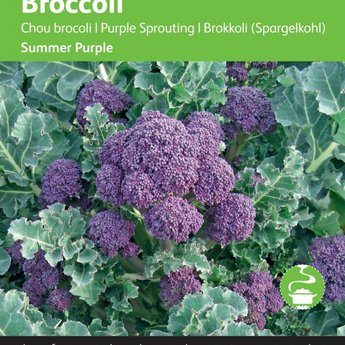 Moestuinplant Broccoli Summer Purple zaden