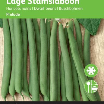 Moestuinplant Stamslabonen Prelude zaden