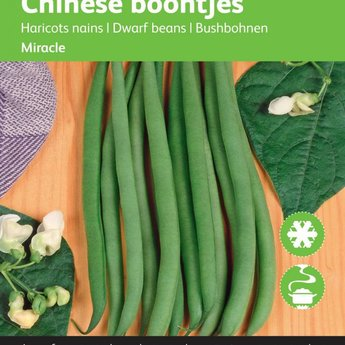 Chinese Boontjes Miracle zaden
