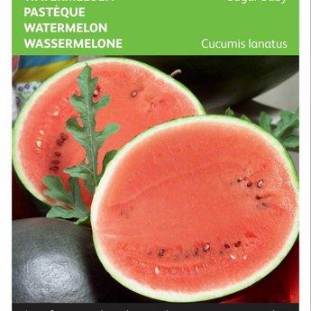 Moestuinplant  Watermeloen Sugar Baby zaden