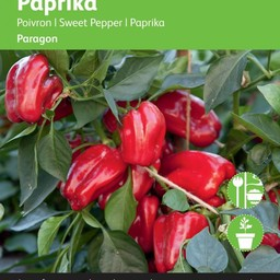 Paprika Snack Paragon