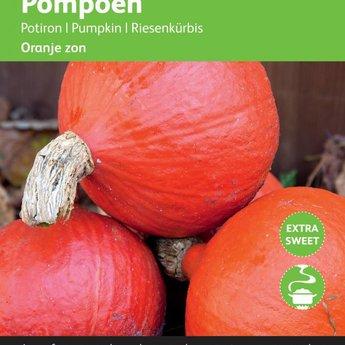 Moestuinplant Pompoenen Uchiki Kuri zaden