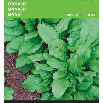 Moestuinplant Spinazie Winterreuzen, Viroflex zaden