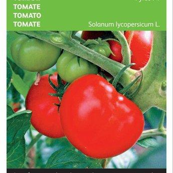 Moestuinplant Tomaat Pyros F1 zaden