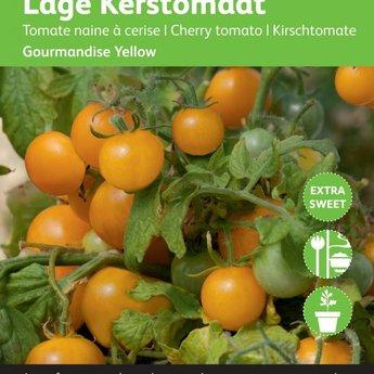Moestuinplant Tomaten Gourmandise (gele cherry patio) zaden
