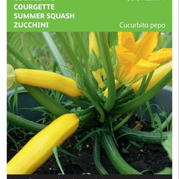 Courgette Gold Rush F1
