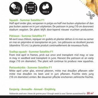 Moestuinplant Courgette Patisson Colour mix zaden