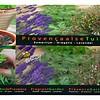 Moestuinplant Zinken Teiltje Provencaalse Geurentuin