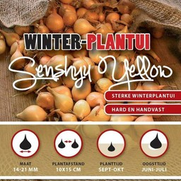 Winter Plantuien Senshyu Yellow 250 Gram