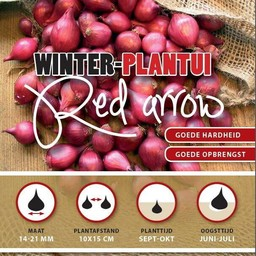 Winter Plantuien Red Arrow 250 Gram