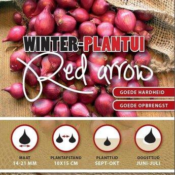 Winter Plantuien Red Arrow 250 Gram