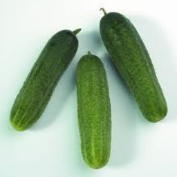 augurk (9 planten)