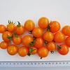 Moestuinplant Geënte oranje cherrytomaten (9 planten)