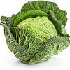 Savooiekool (9 planten)