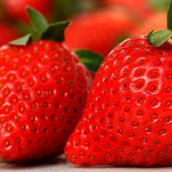Aardbeien planten ''Senga Serngana''