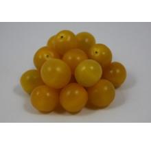 Geënte gele cherrytomaten planten