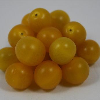 Moestuinplant Geënte gele cherrytomaten planten