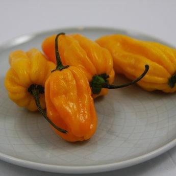 Moestuinplant Gele Madam Jeanette peper planten