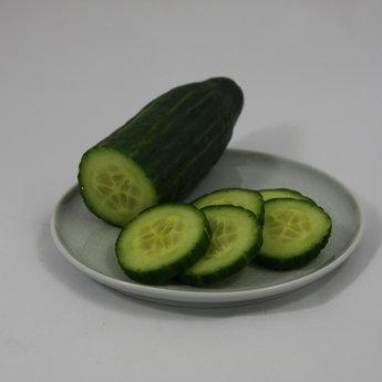 Moestuinplant Geënte komkommerplanten