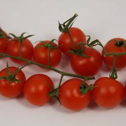 Moestuinplant Geënte cherrytomaten