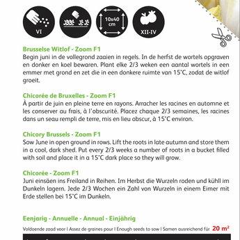 Moestuinplant Witlof Brusselse Zoom F1