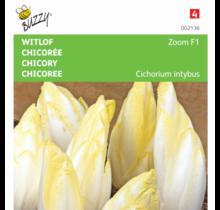 Witlof Brusselse Zoom F1
