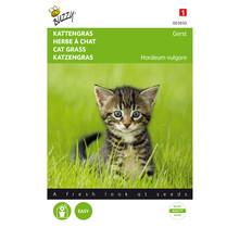 Kattengras Gerst