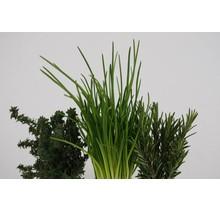 Mixpakket diverse kruidenplanten peterselie, salvia, bieslook