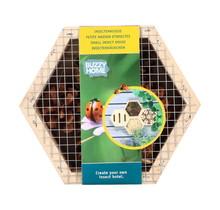Home Hexagon Lieveheersbeestjes