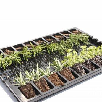 Moestuinplant Rozemarijn planten
