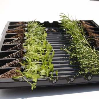 combipakket sla & kruiden planten