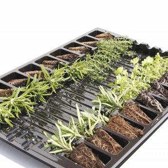 Moestuinplant mixpakket diverse kruidenplanten citroenmelisse, munt en tijm