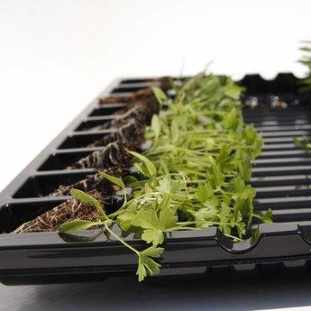 Moestuinplant mixpakket diverse kruidenplanten munt, peterselie en basilicum