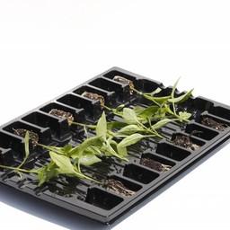 mixpakket peper en paprika (9 planten)