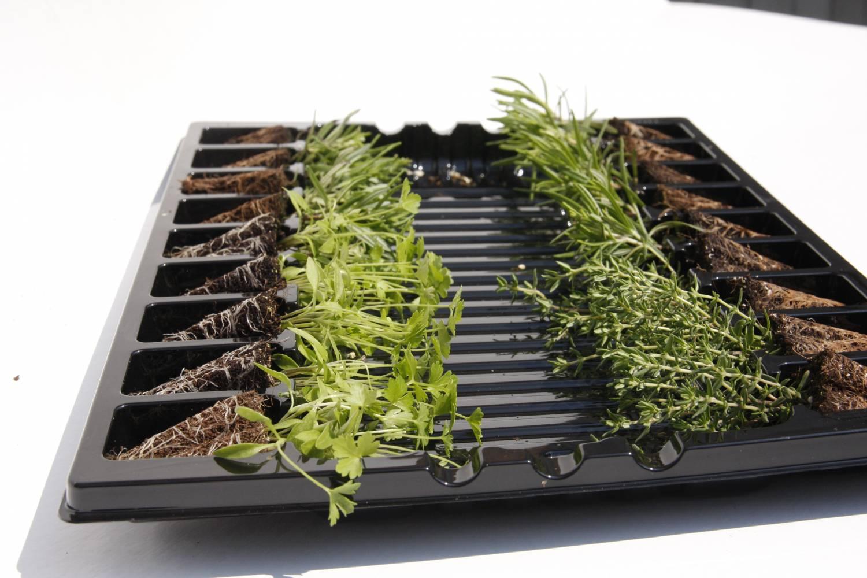 Kruiden uit eigen tuin
