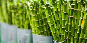 Bamboe sokken, een duurzaam alternatief?