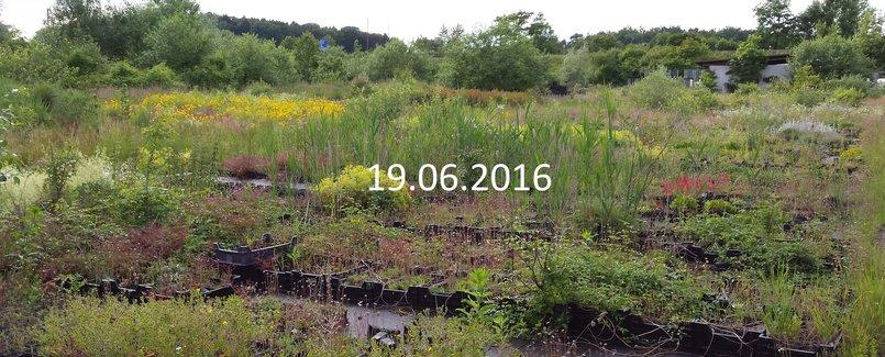 A. Pfenninger Pflanzen AG 19.6.2016
