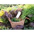 Bloemen & Groenten zaden