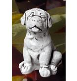 Demmerik 73 A051 labrador pup